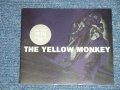 "イエロー・モンキー THE YELLOW MONKEY - 楽園( PROMO ONLY) ( MINT-/MINT)  / 1996 JAPAN ORIGINAL ""PROMO ONLY"" Used  3"" CD Single"